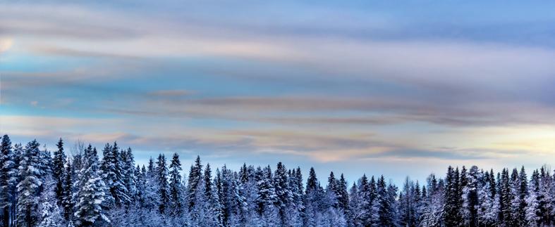 Eriwood är en av sveriges största grossister inom sågade och vidareförädlade trävaror
